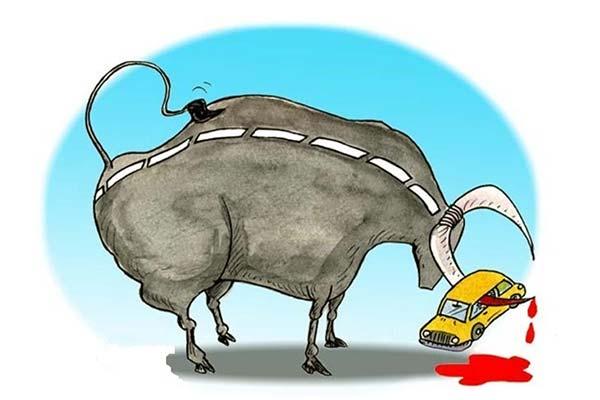 traffic-safety-bull